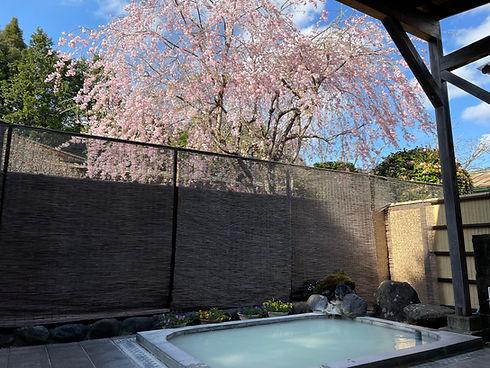 *露天風呂と桜.jpg