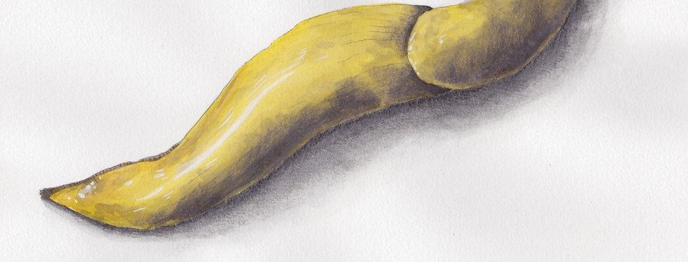 """""""Banana Slug"""" by Brett Bell"""