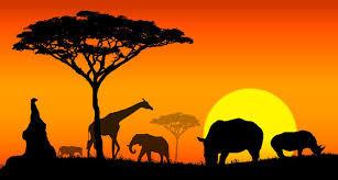 15 lições de liderança que a África me deu.