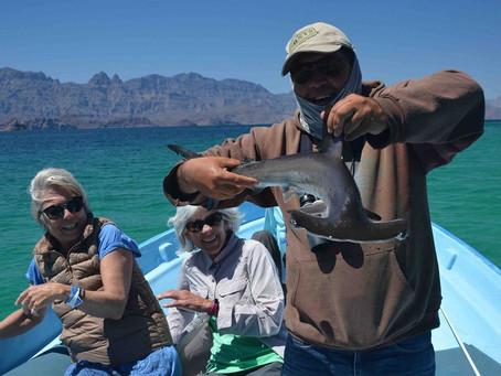 A Hammerhead Shark In Our Panga!