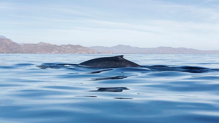 Climate Forum II Plastics and Whales – Squam Valley