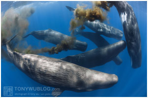 Who'd have guessed: Whale poop keeps fish on your plate – and helps reduce global warming too