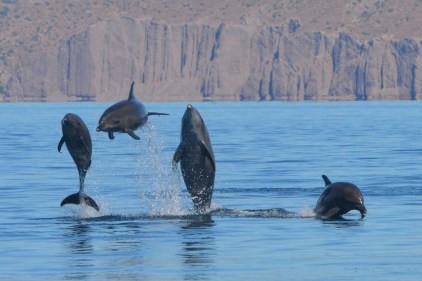 Baja Blog 2015 – Week 2