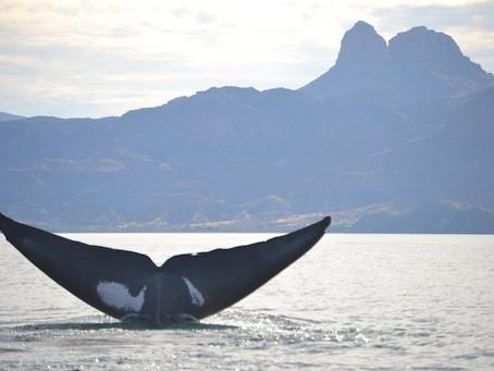 Baja California – Week 4 Report