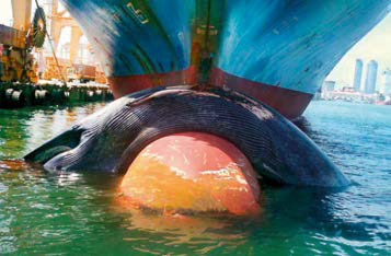 Great Whale Conservancy (GWC) Ship Strikes Strategy