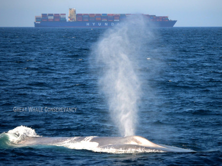 Whales are more vulnerable to ship strikes at night — new study shows