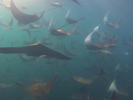 Baja Blog 2015 – Week 7