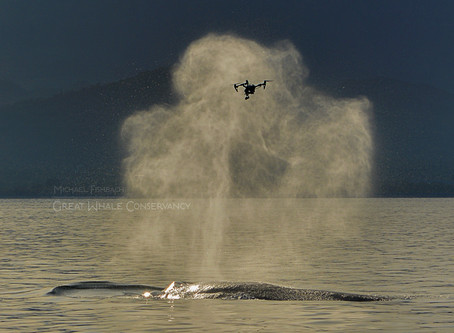 How Drones Are Helping Scientists Study the Future of Whales