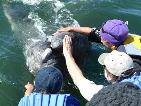Baja California – Week 3 Report