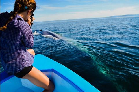 Delphi Waters & Blue Whale