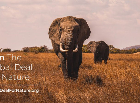 We support The Global Deal for Nature
