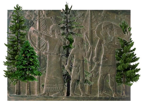 Cedar Forest- Shirin Khalatbari.jpg