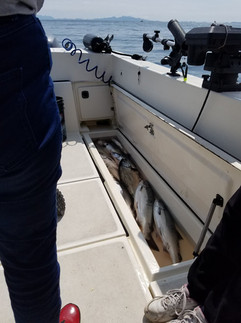 Salmon Fishing Charters Prince Rupert