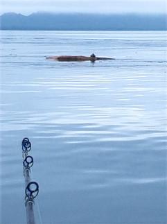 Fish Northern BC Prince Rupert