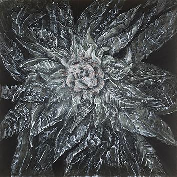 Cannabis sativa x indica, black widow