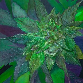 Marijuana #1