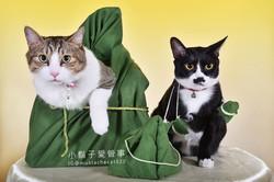 影藝攝影-寵物攝影-貓貓咪寫真-端午節