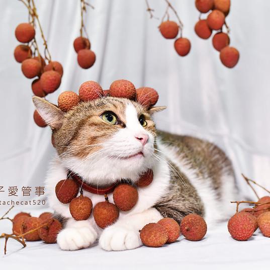 影藝攝影-貓咪攝影-毛毛.jpg