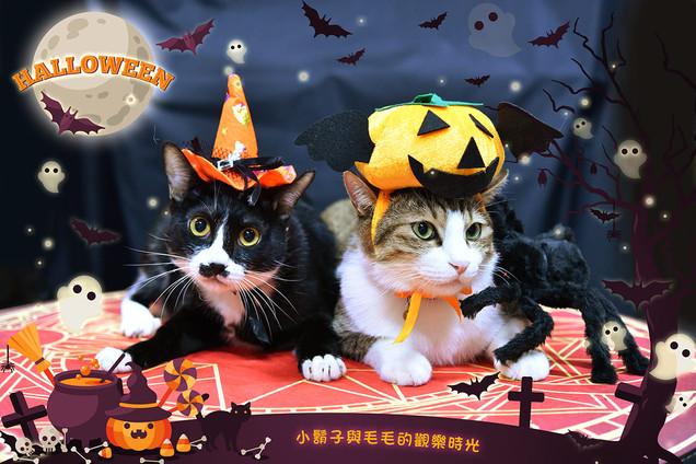 影藝攝影-寵物攝影-貓貓咪寫真-萬聖節.jpg