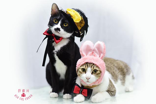 影藝攝影-寵物攝影-貓貓咪攝影.jpg