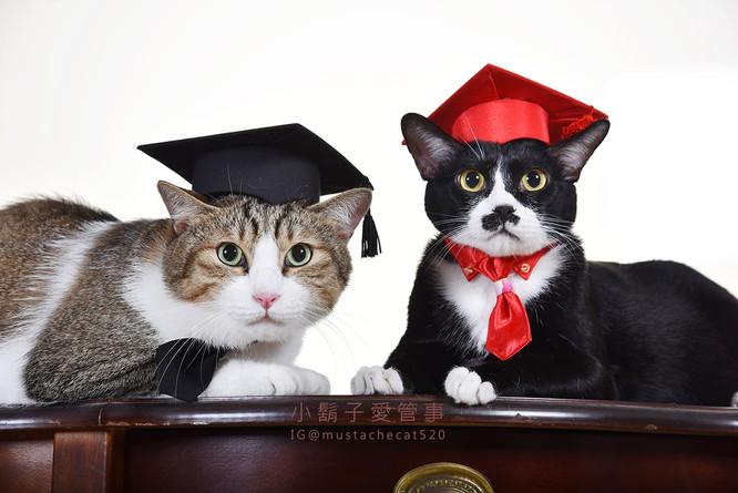 影藝攝影-寵物攝影-貓貓咪寫真.jpg