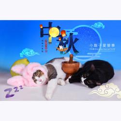 影藝攝影-專業貓咪攝影-中秋節