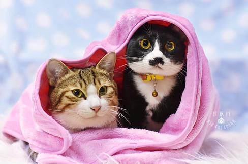 影藝攝影-寵物攝影-貓咪攝影.jpg