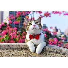 影藝攝影-高雄照相館-寵物攝影.jpg