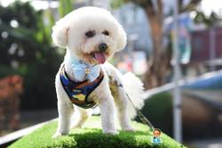 影藝攝影-專業狗狗攝影-外景攝影