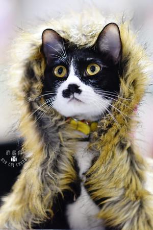 影藝攝影-寵物攝影-貓貓咪寫真-冬季鬍子.jpg