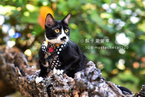 影藝攝影-專業貓咪攝影-外拍.jpg