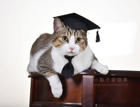 影藝攝影-寵物攝影-貓貓咪寫真-畢業 毛嗎.jpg