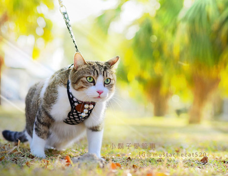 影藝攝影-專業貓咪攝影-外拍陽光普照.jpg