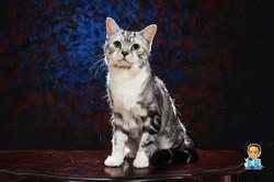 影藝攝影-專業貓咪攝影-