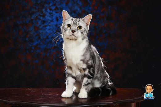 影藝攝影-專業貓咪攝影-.jpg