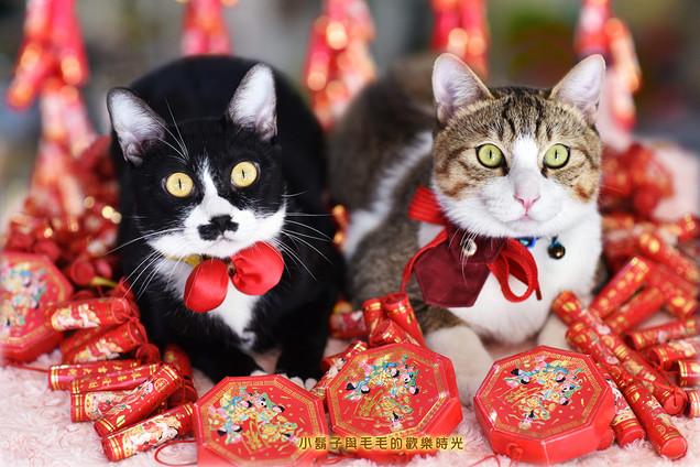 影藝攝影-寵物攝影-節慶攝影.jpg