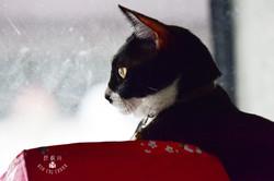 影藝攝影-寵物攝影-小鬍子愛管事