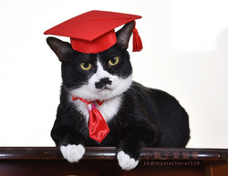 影藝攝影-寵物攝影-貓貓咪寫真-畢業 小鬍子