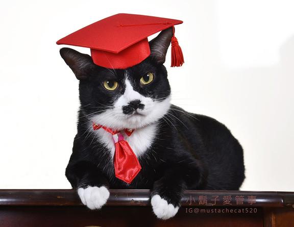 影藝攝影-寵物攝影-貓貓咪寫真-畢業 小鬍子.jpg