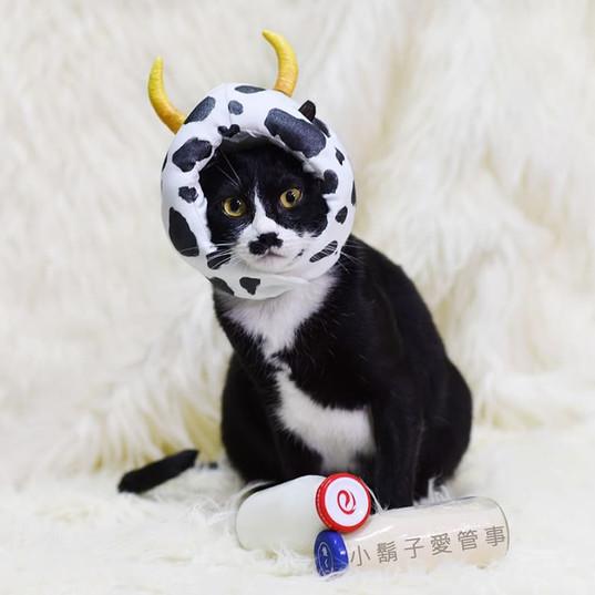 影藝攝影-貓咪攝影-鬍子.jpg