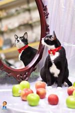 影藝攝影-寵物攝影-貓貓咪寫真-魔境.jpg