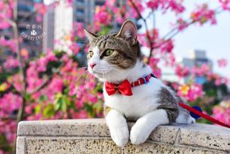 影藝攝影-寵物攝影-戶外貓攝影.jpg