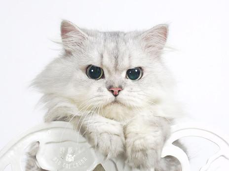 影藝攝影-寵物攝影-咪咪.jpg