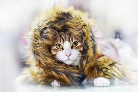 影藝攝影-寵物攝影-貓貓咪寫真-冬季.jpg
