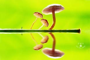草菇 微距攝影.jpg