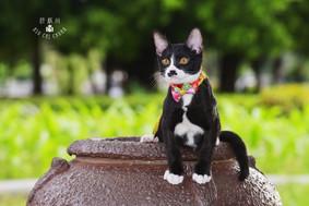 影藝攝影-寵物攝影-戶外攝影.jpg