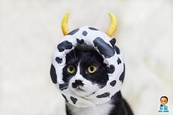 影藝攝影Yingyiphoto-pet photography-高雄寵物寫真