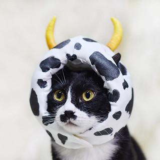 影藝攝影Yingyiphoto-pet photography-高雄寵物寫真.j