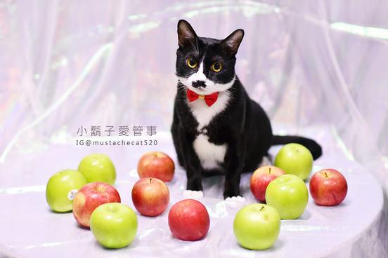 影藝攝影-寵物攝影-貓貓咪寫真-頻果貓咪.jpg