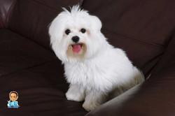 影藝攝影-可愛狗狗攝影